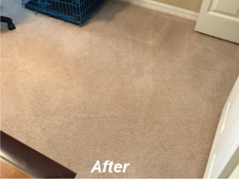 Carpet and Area Rug Pet Stain and Odor Remover